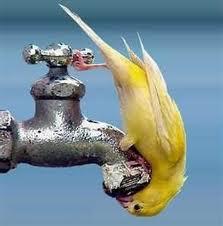 Acqua indspensabile